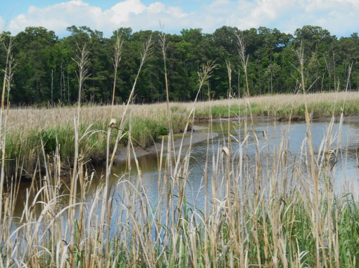 A marsh on Jamestown Island.