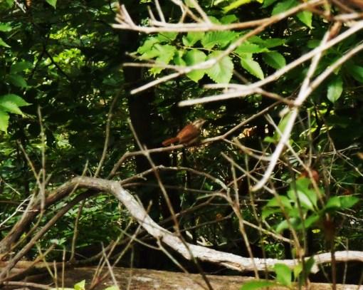 May 27. 2014 Herons 010