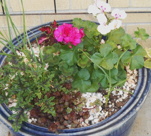 May 3 2014 afternoon garden 054