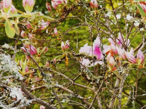 May 5 2014 garden 017