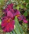 May 5 2014 garden 038