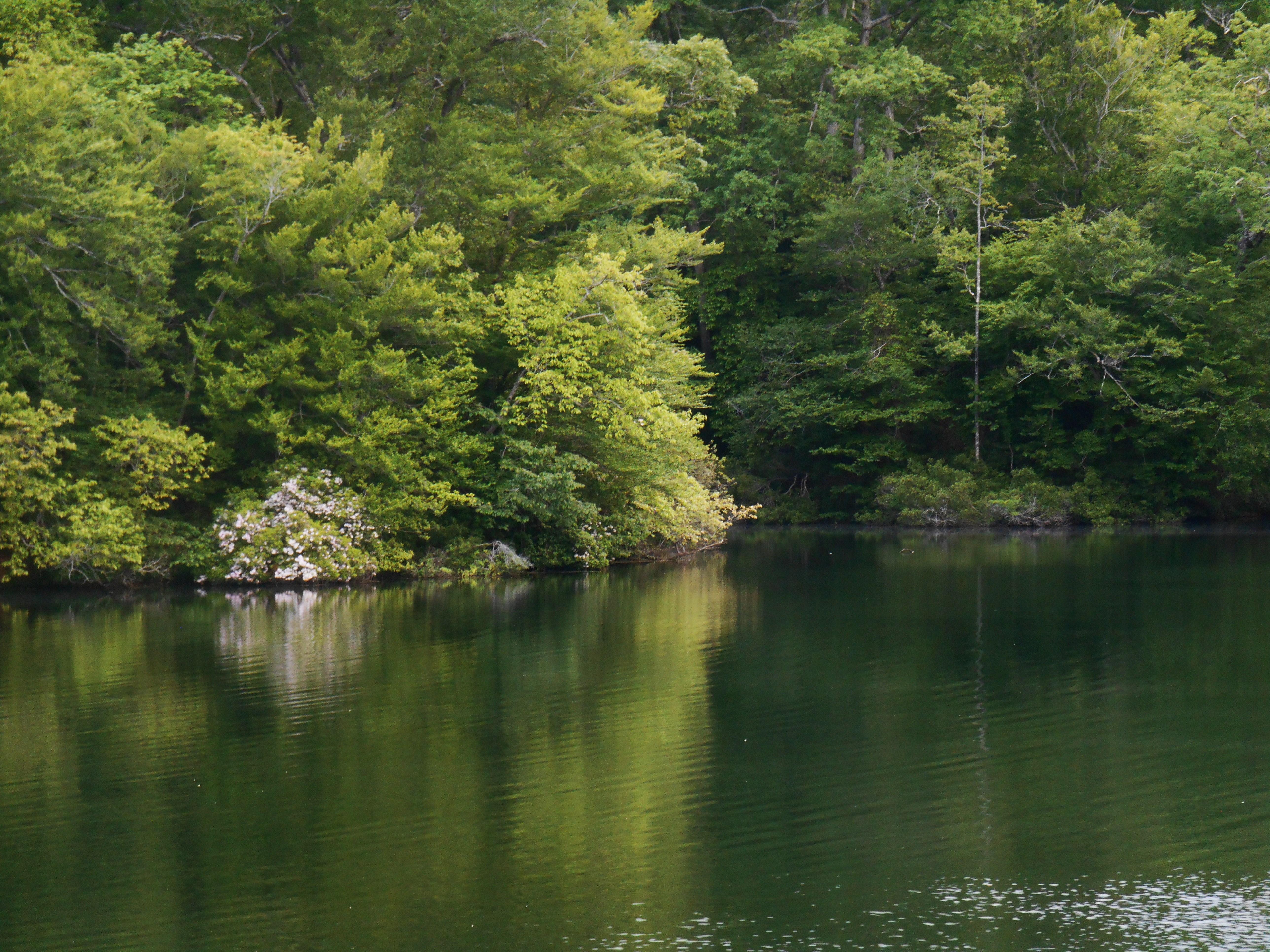 Mountain Laurel Forest Garden