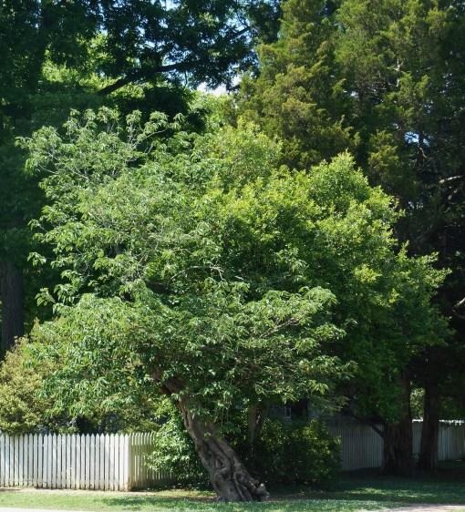 June 14, 2014 trees 005