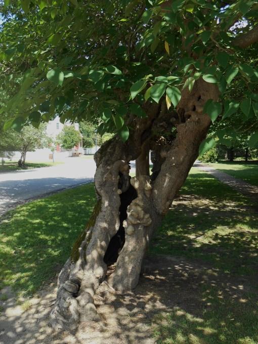 June 14, 2014 trees 007