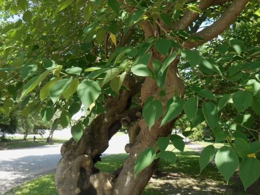 June 14, 2014 trees 008