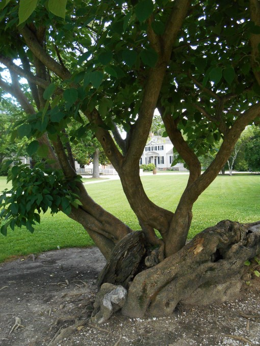 June 14, 2014 trees 021