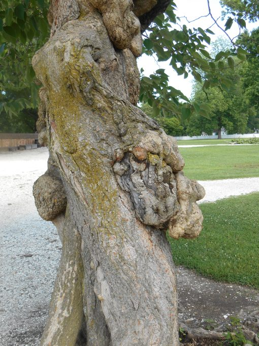 June 14, 2014 trees 023