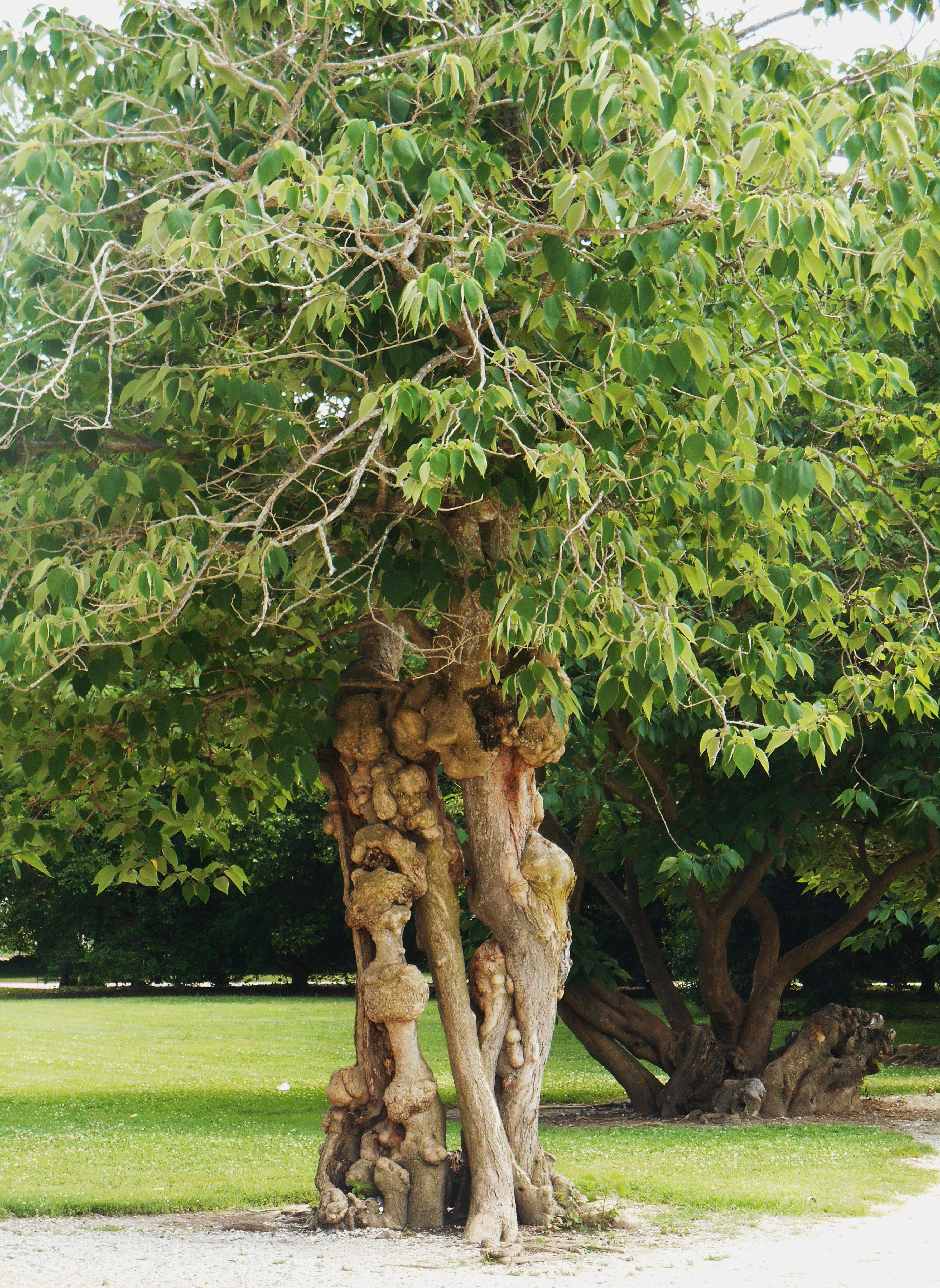 Tree Creatures | Fores...