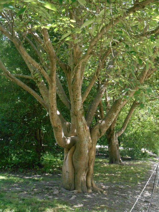 June 14, 2014 trees 040