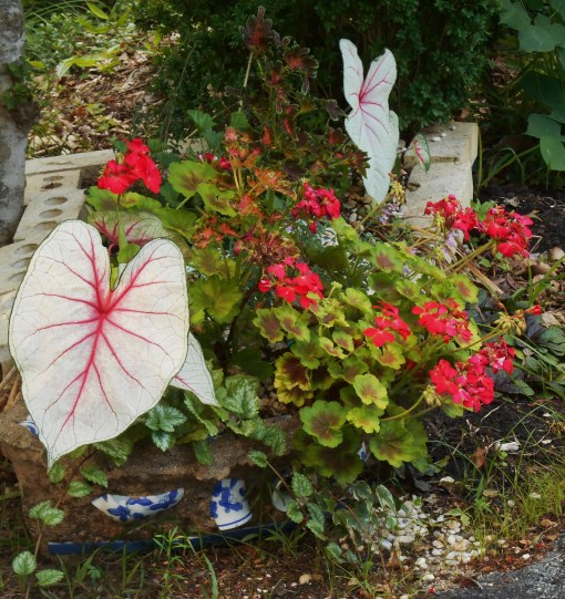 Zonal geraniums are distasteful to deer both for their odor and the texture of their leaves.  They protect the Coleus, Begonia, and ivy in this pot.  The Caladiums are poisonous.