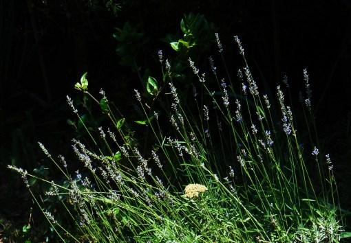 June 27, 2014 garden 006