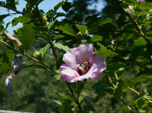 June 27, 2014 garden 019