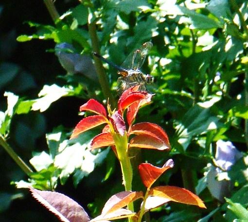 June 27, 2014 garden 038