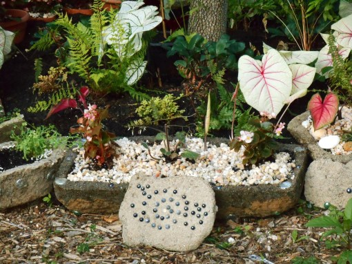 The final Caladium plants came out into the garden on June 7. This final hypertufa trough also holds the Saxifraga