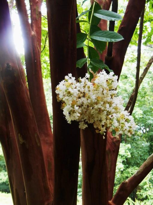 July 11, 2014 garden 073