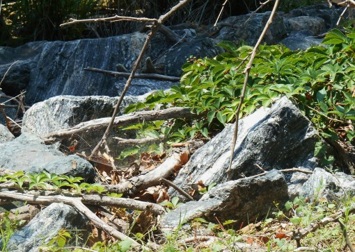 Granite shoring up the river's edge.  Do you see the spider's web?