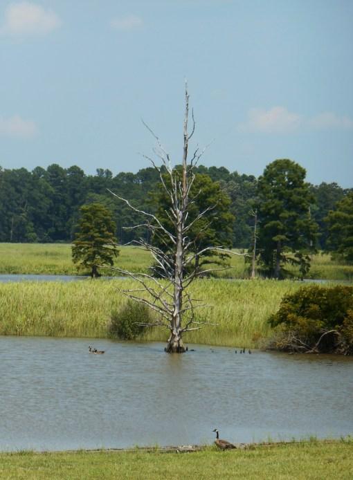 July 14, 2014 Jamestown Island 035