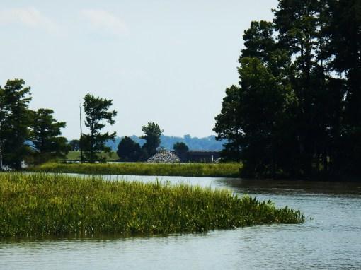 July 14, 2014 Jamestown Island 046