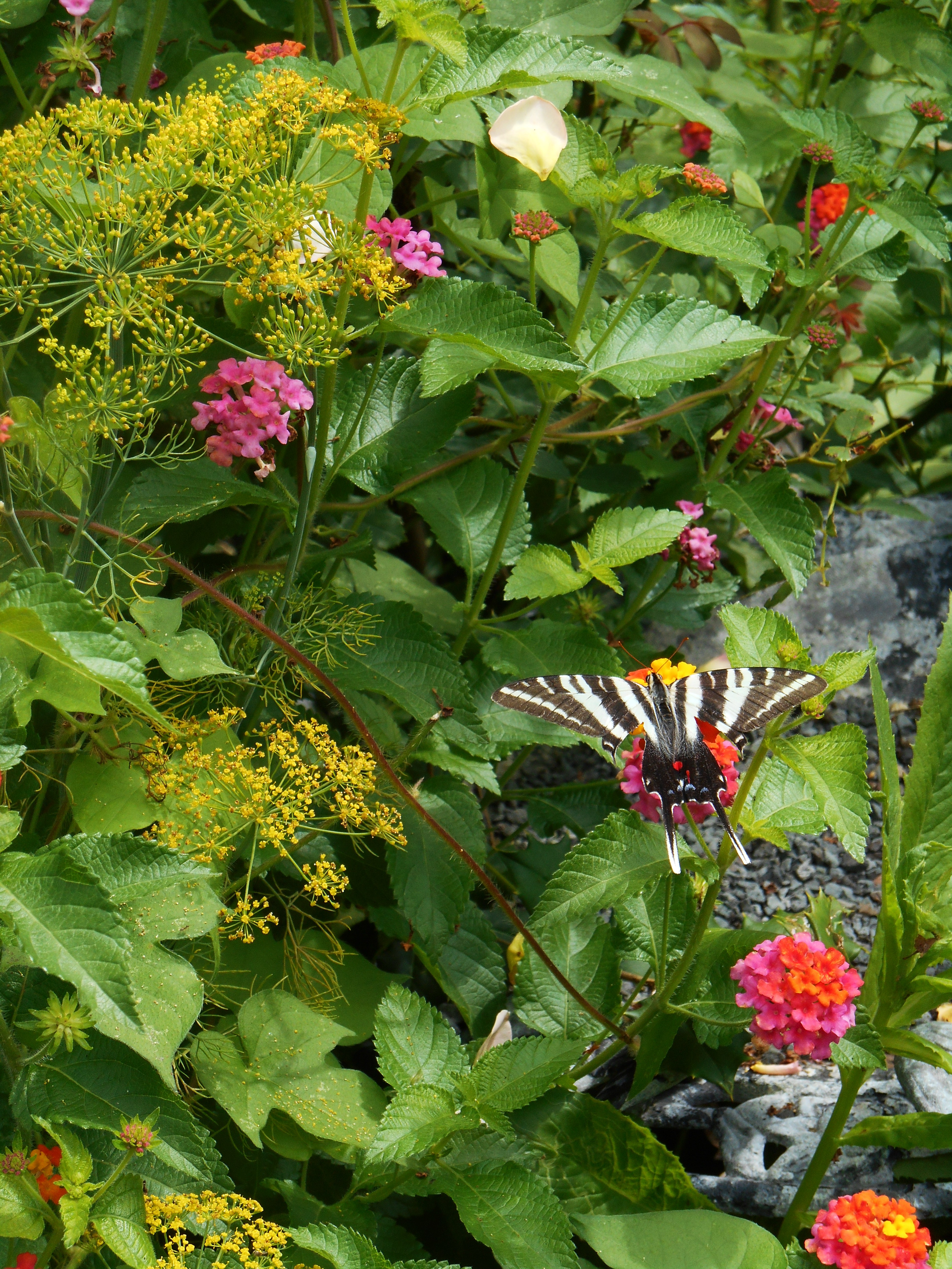 Creating A Hummingbird And Butterfly Garden Forest Garden