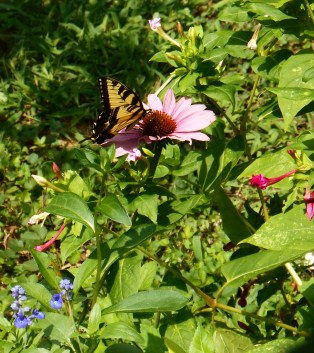 July 20, 2014 butterflies 035