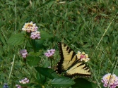 July 20, 2014 butterflies 041