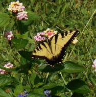 July 20, 2014 butterflies 043
