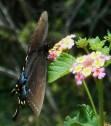 July 20, 2014 butterflies 051