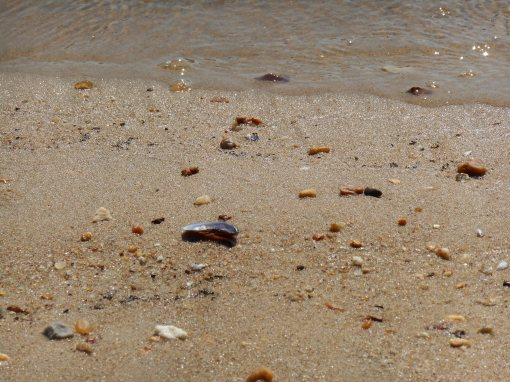 july 25, 2014 beach 029