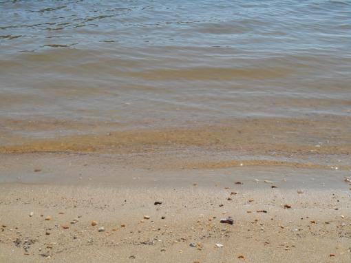 july 25, 2014 beach 031