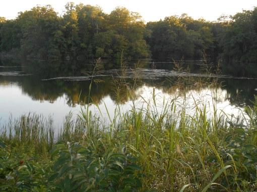 July 28, 2014 pond 019
