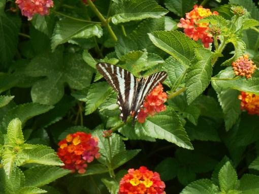 June 30, 2014 butterfly 004