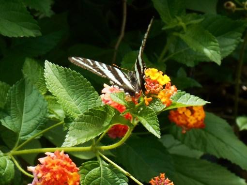 June 30, 2014 butterfly 006