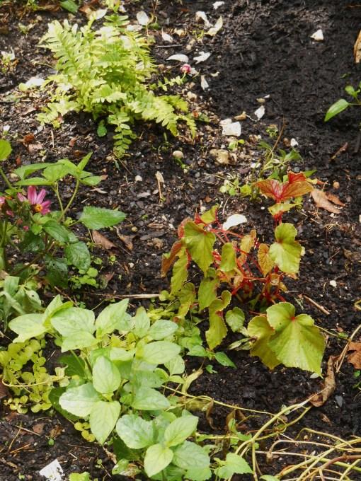 August 16, 2014 garden 036