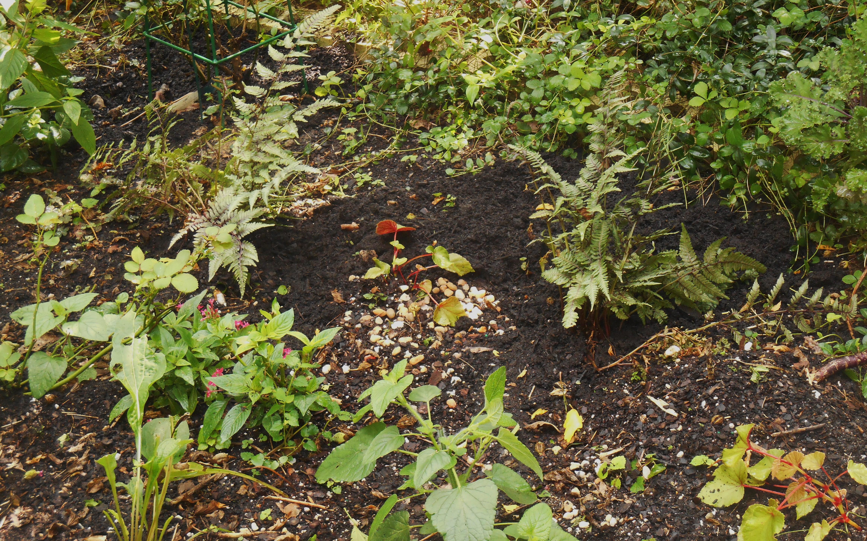 zinnia | Forest Garden