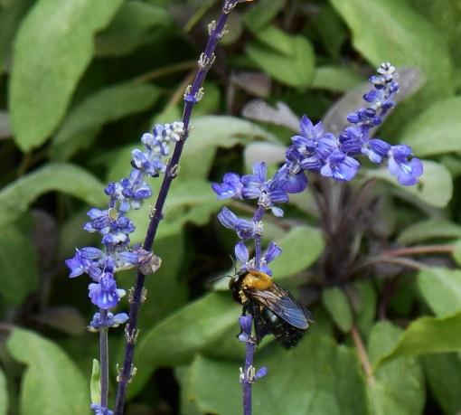 August 19, 2014 lavender 016