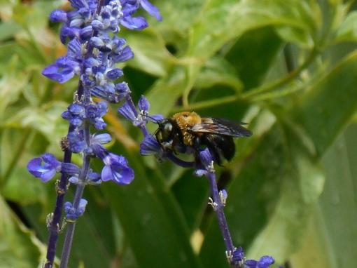August 19, 2014 lavender 019