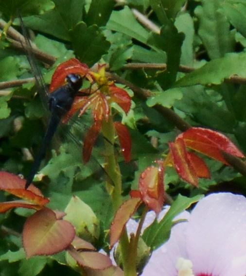August 19, 2014 lavender 031