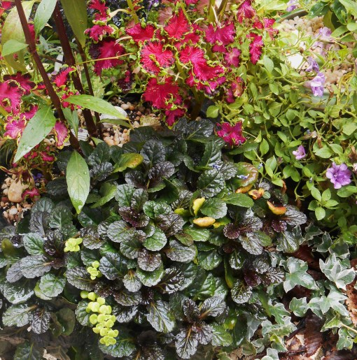 Ajuga, Coleus, and Petunias.