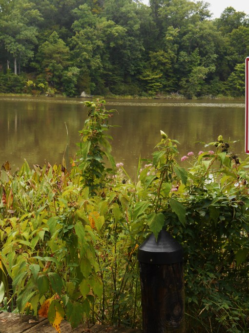 August 23, 2014 Creek 005