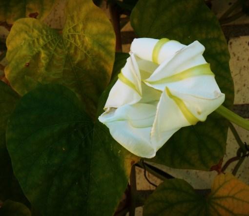 August 26, 2014 garden 036