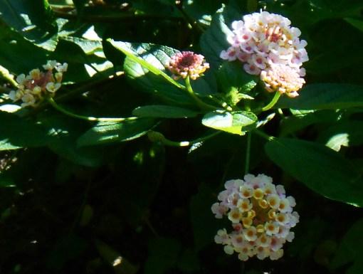 August 26, 2014 garden 083