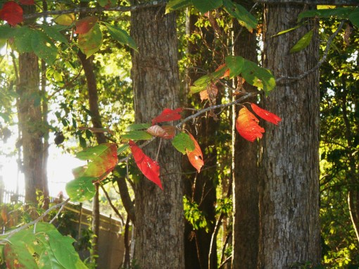 Trees turning for fall before our community pool has even closed for the season.