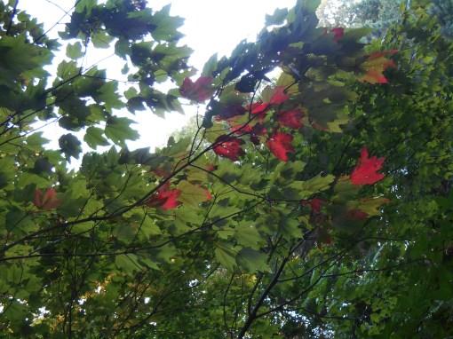 August 28, 2014 garden 013