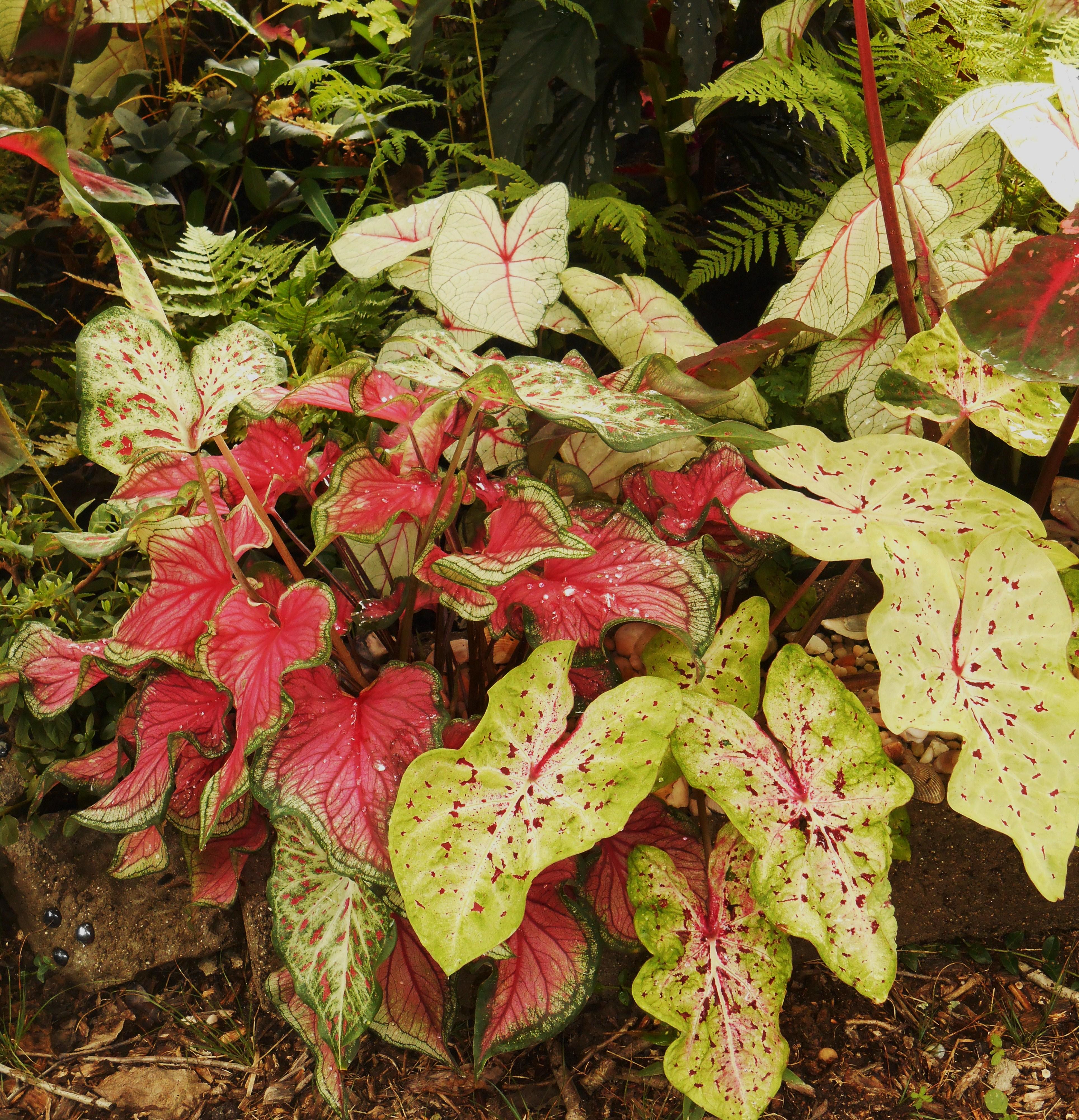 Plant Delights Nursery | Forest Garden