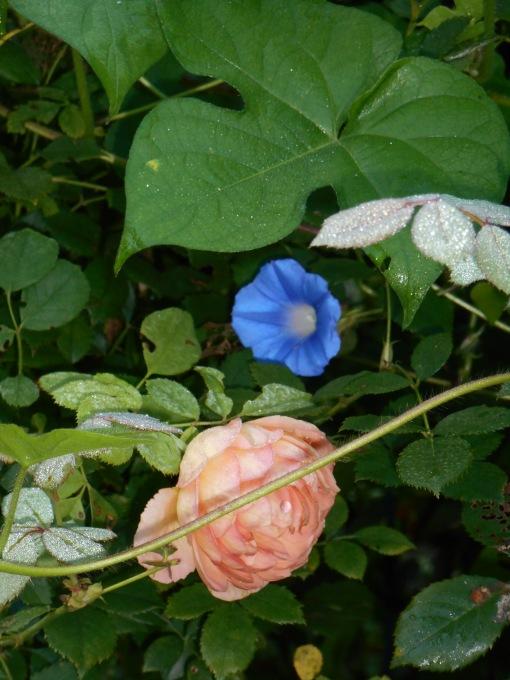 August 5, 2014 garden 001