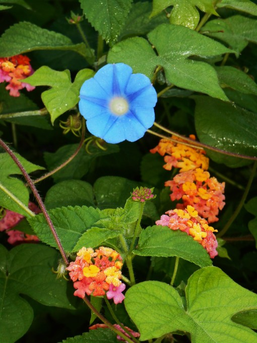 August 5, 2014 garden 002