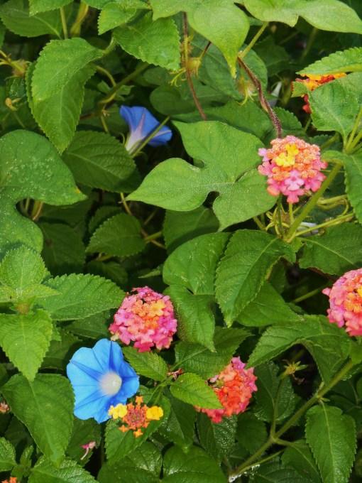 August 5, 2014 garden 004