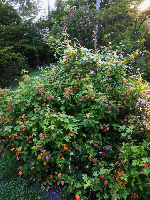 August 5, 2014 garden 005