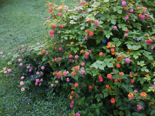 August 5, 2014 garden 006