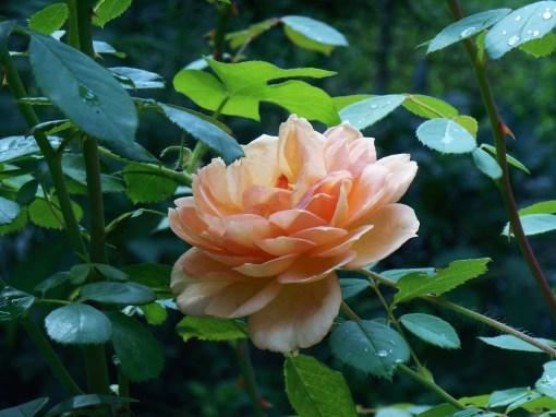 August 7, 2014 garden 040